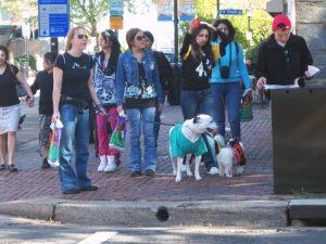 Dogs hitting the pavement