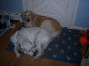 Percy and Merlin - our dogs