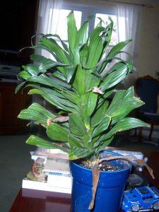 Plant #1