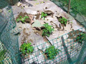 gardenreplant